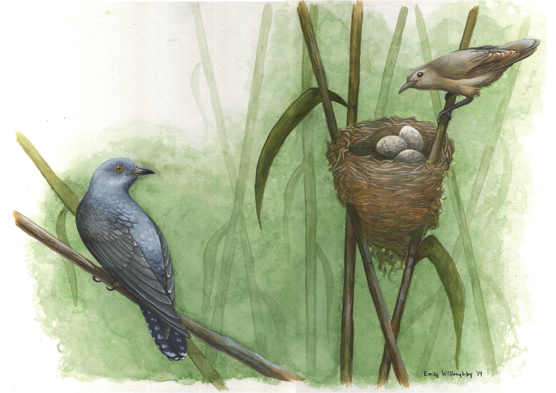 Cuckoo and Warbler: Nest Parasitism 1