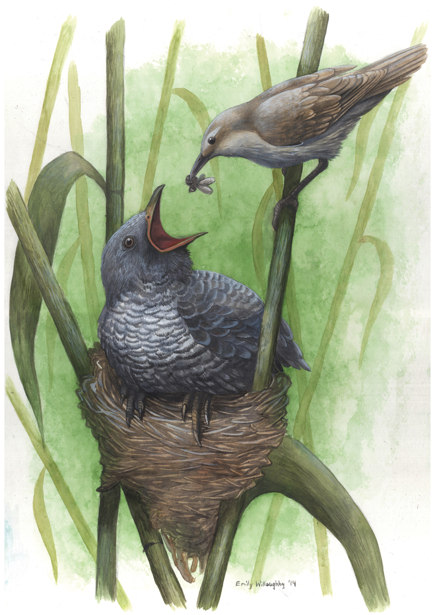 Cuckoo and Warbler: Nest Parasitism 5