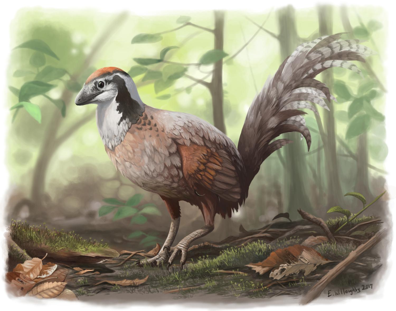 Jinfengopteryx Junglefowl