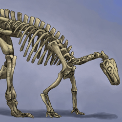 Camptosaurus - Old and New