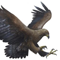 Golden Eagle Mk. II