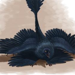 Microraptor Threat Display